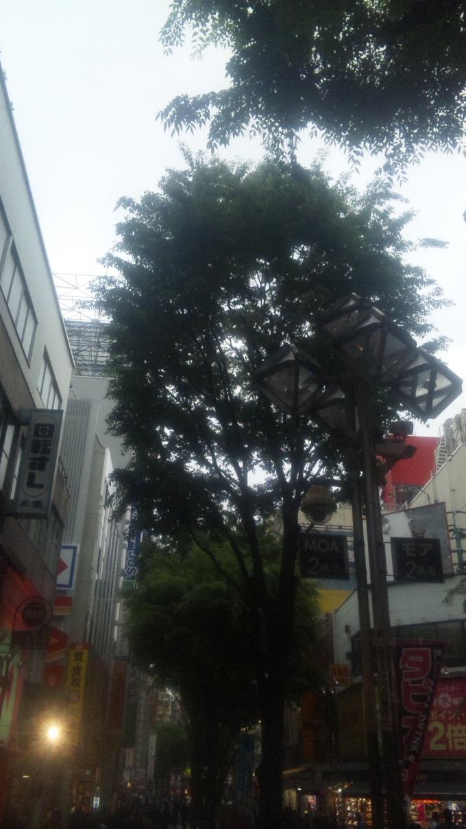 SHINJUKU_20110503
