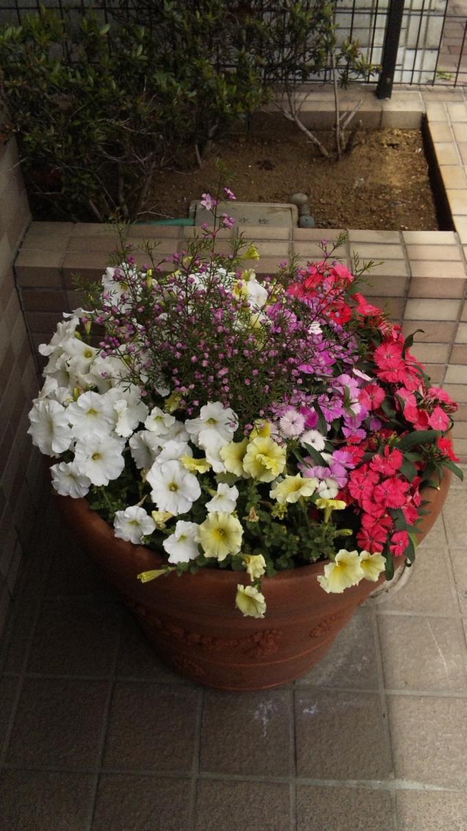 Flowers_20110503