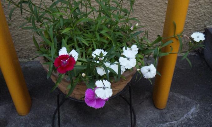 Flowers_20110504