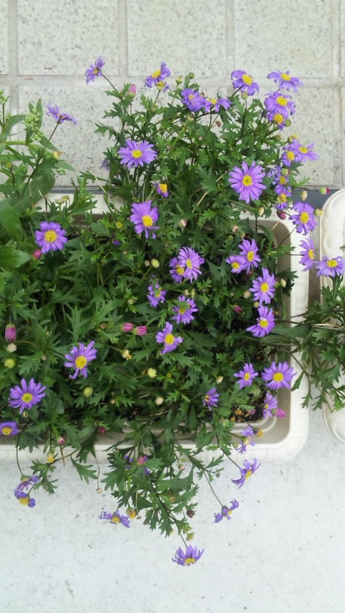 Flowers_20110606
