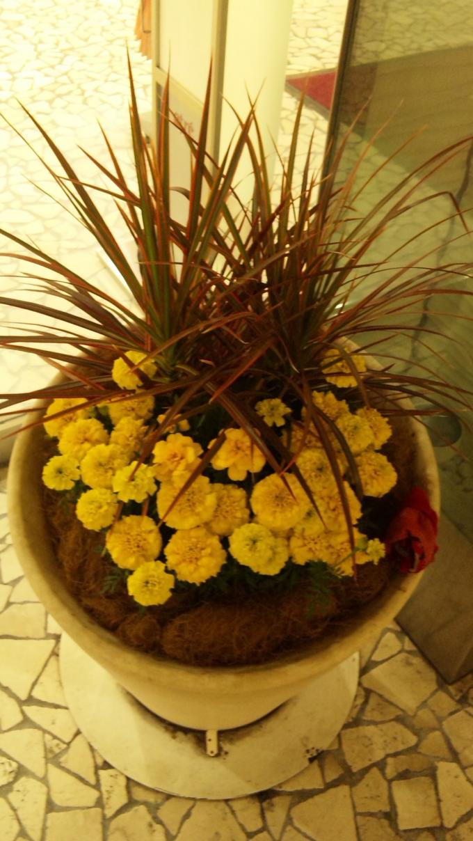 Flowers_20110608