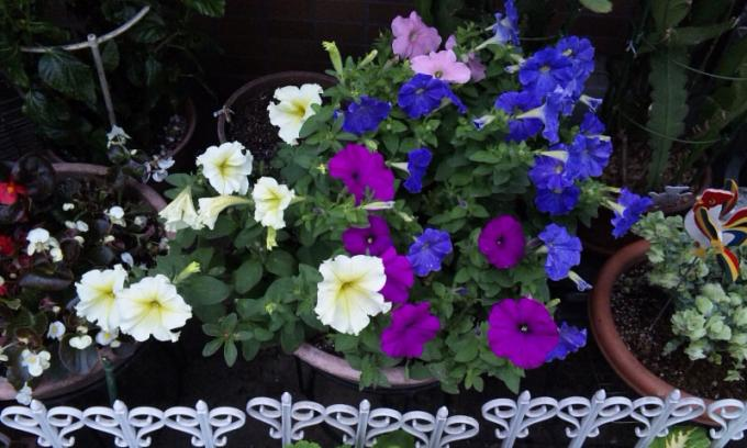 Flowers_20110614