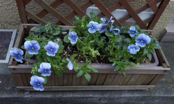 Flowers_20110615