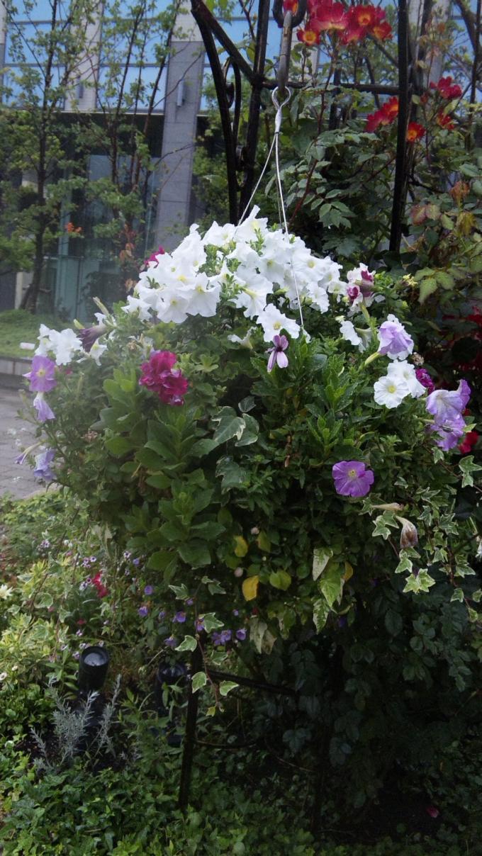 Flowers_20110618