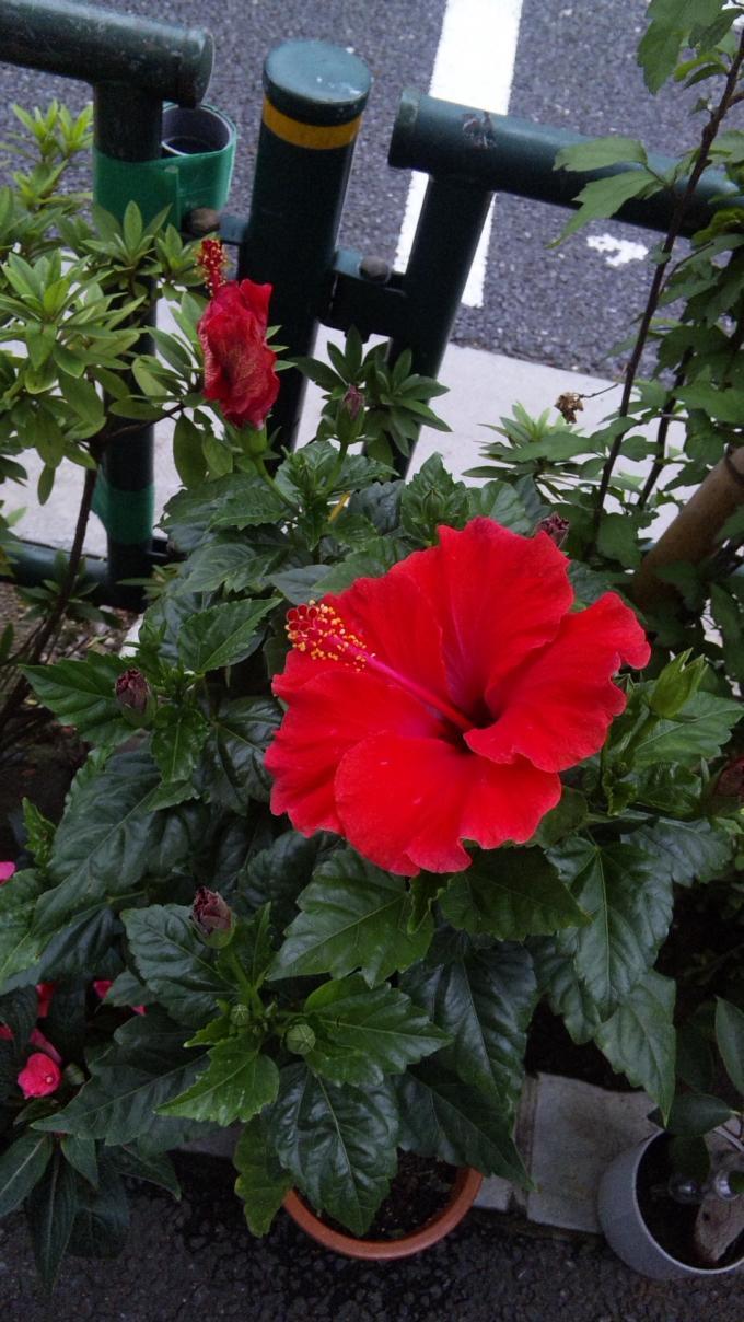 Flowers_20110623