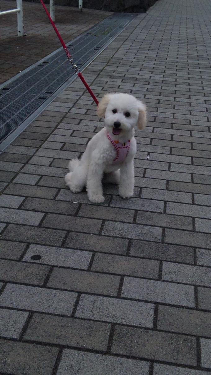 DOG_20110623