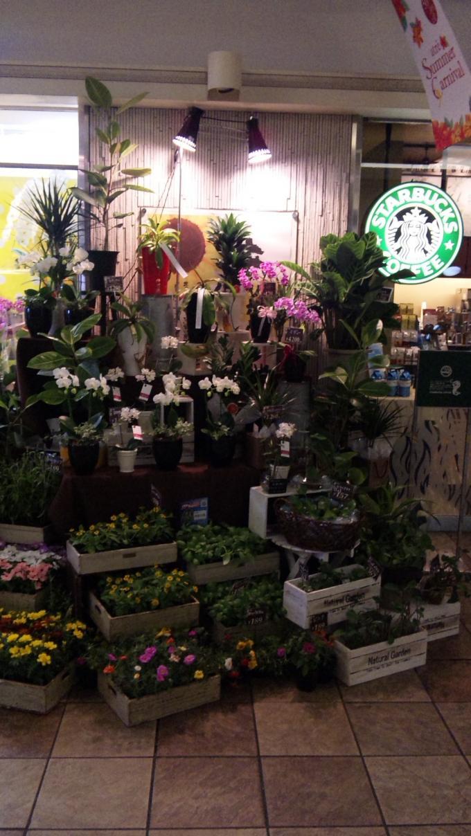 Flowers Shop_20110624