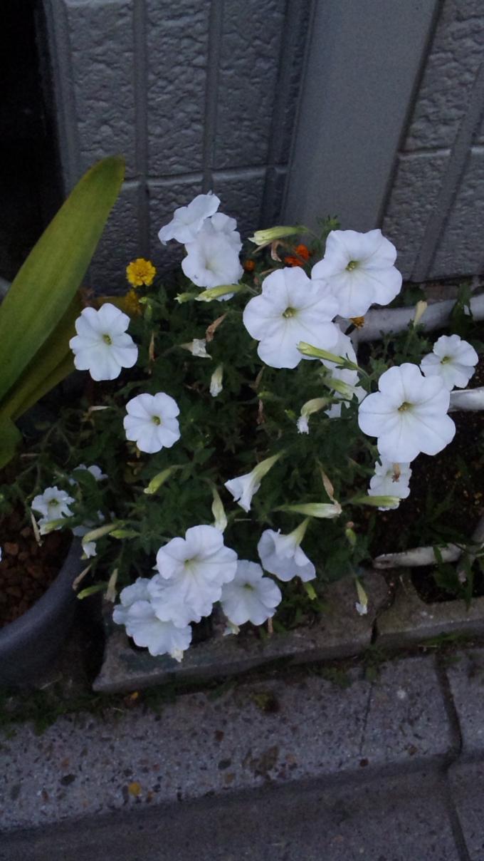 Flowers_20110624
