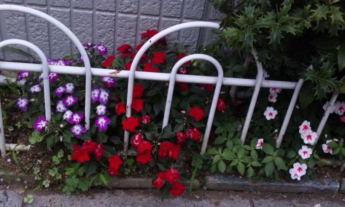 Flowers_20110625