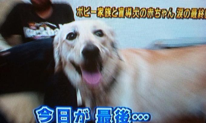 DOG_20110625