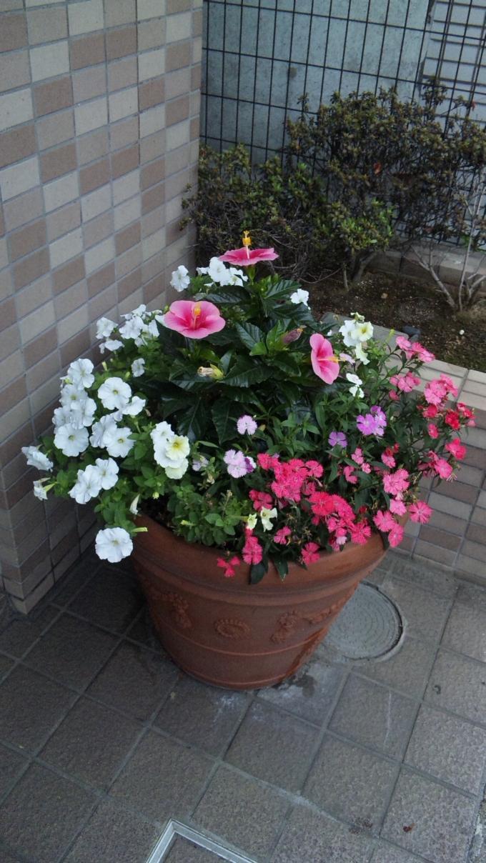 Flowers_20110626