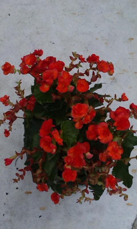 Flowers_20110722