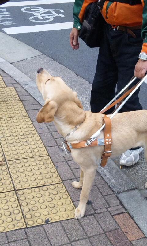 DOG_20111110