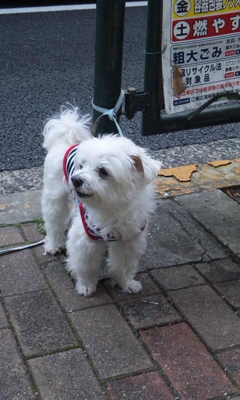 DOG_20111128