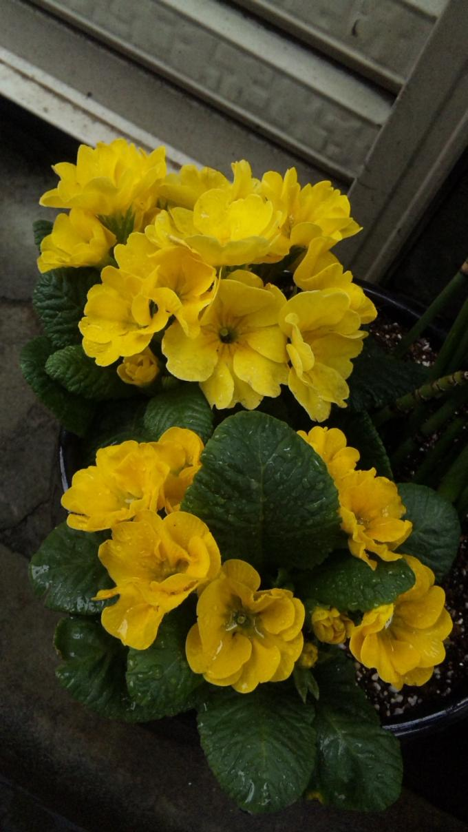Flowers_20120214