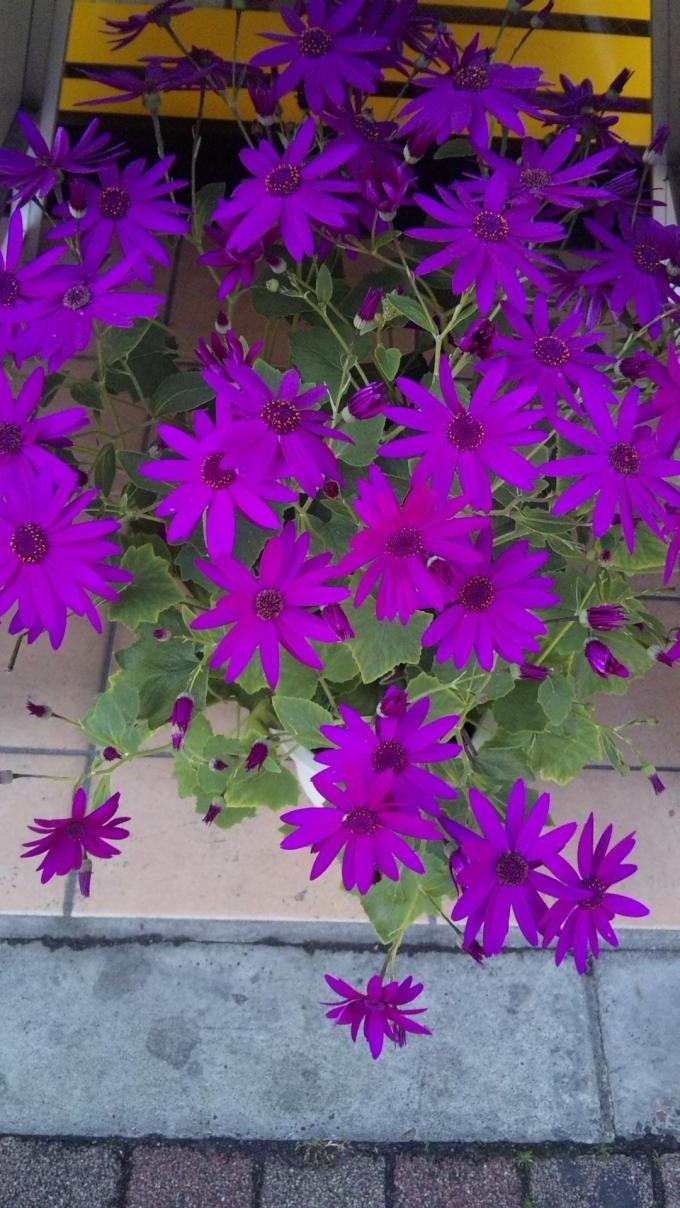 Flowers_20120217