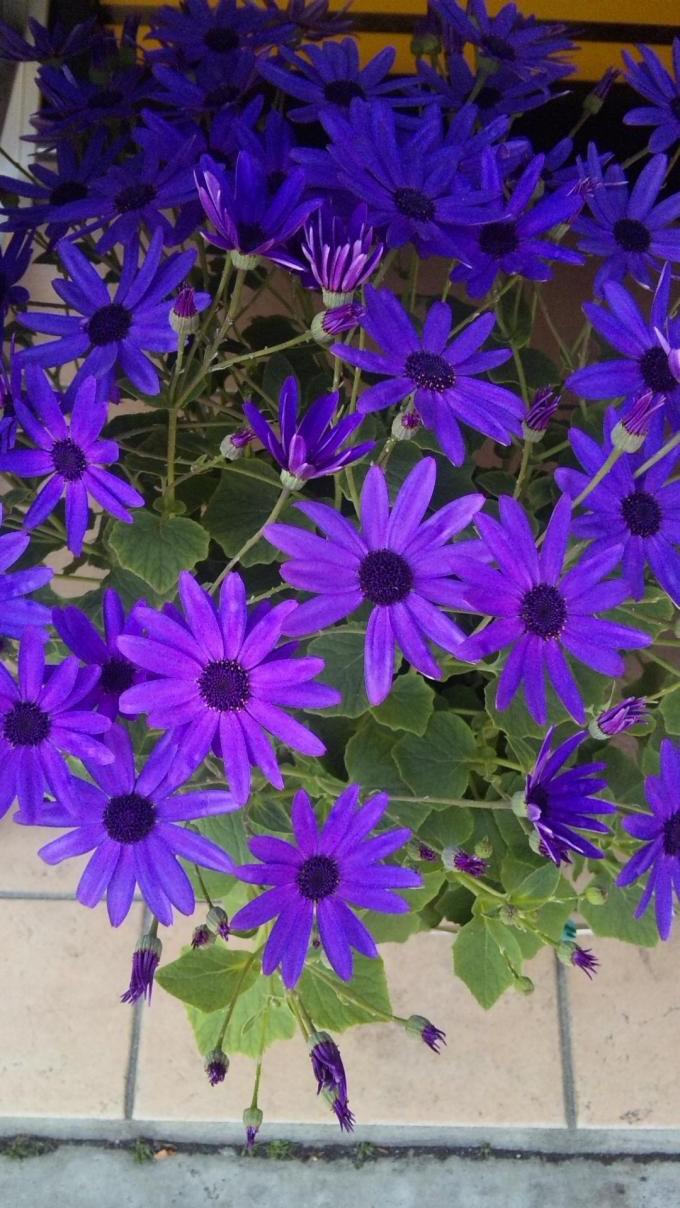 Flowers+・・_convert_20120217200220
