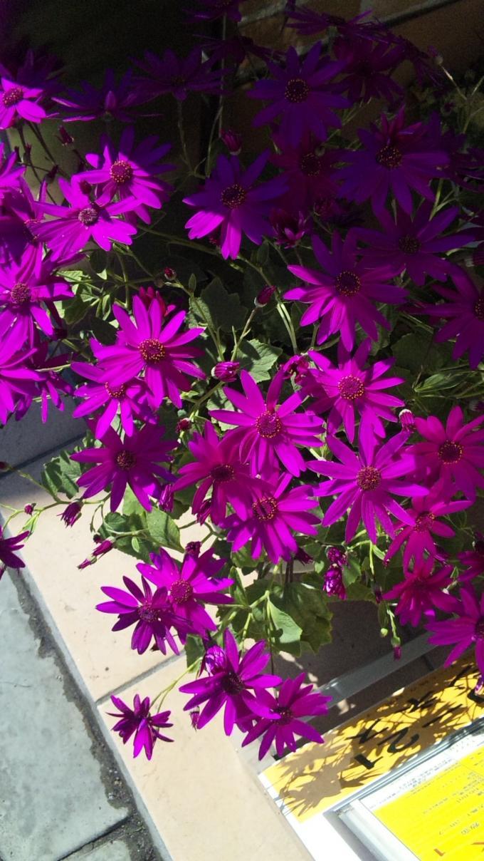Flowers_20120218