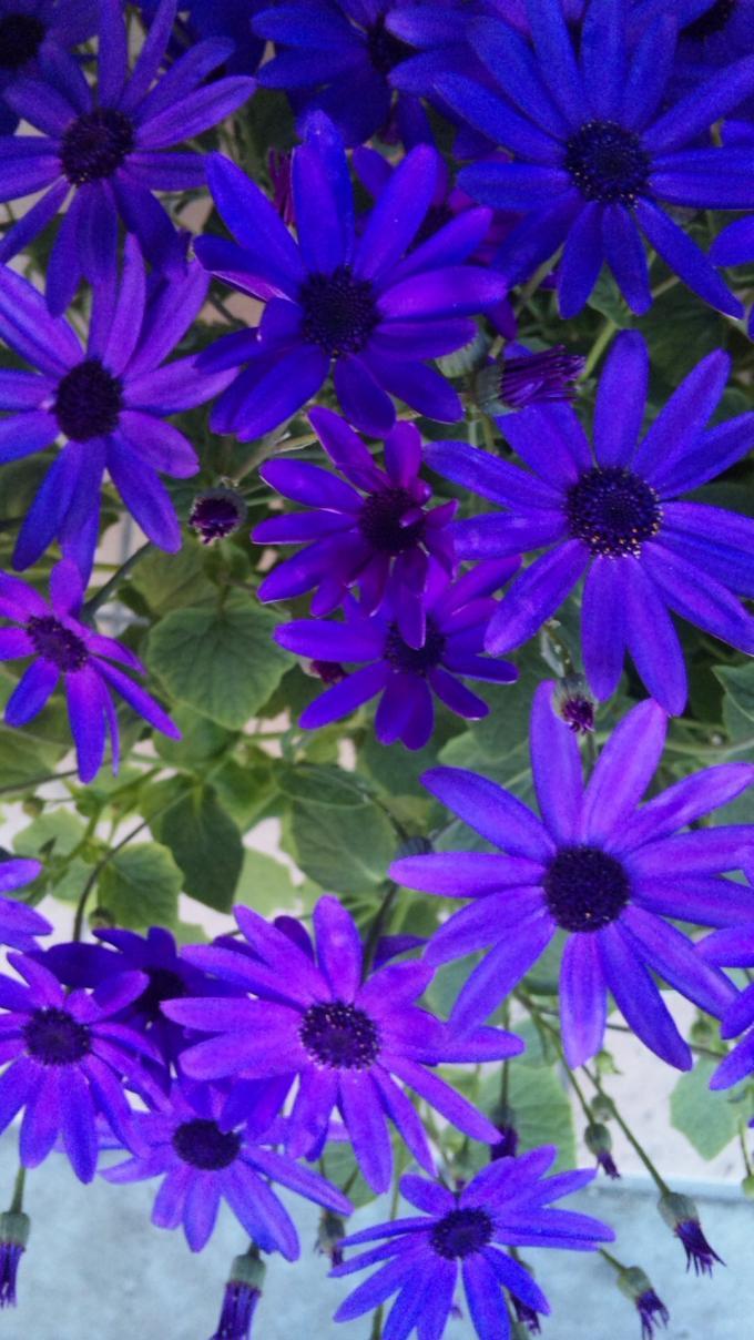 Flowers_20120219
