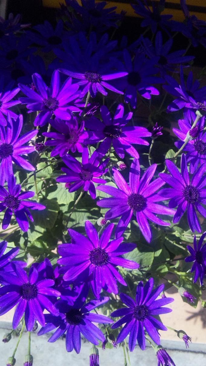 Flowers_20120220