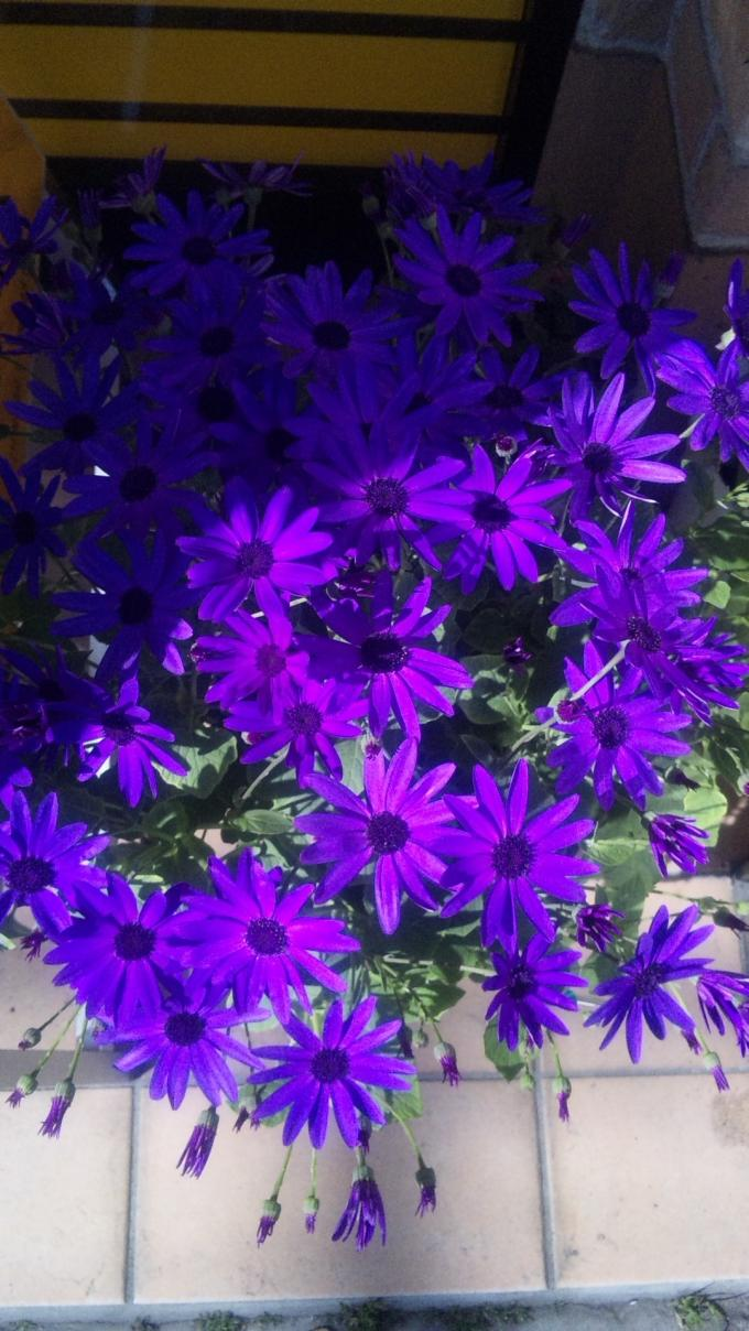 Flowers_20120221