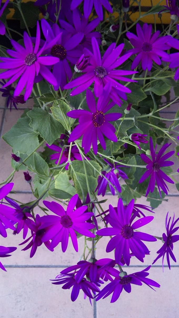Flowers_20120223