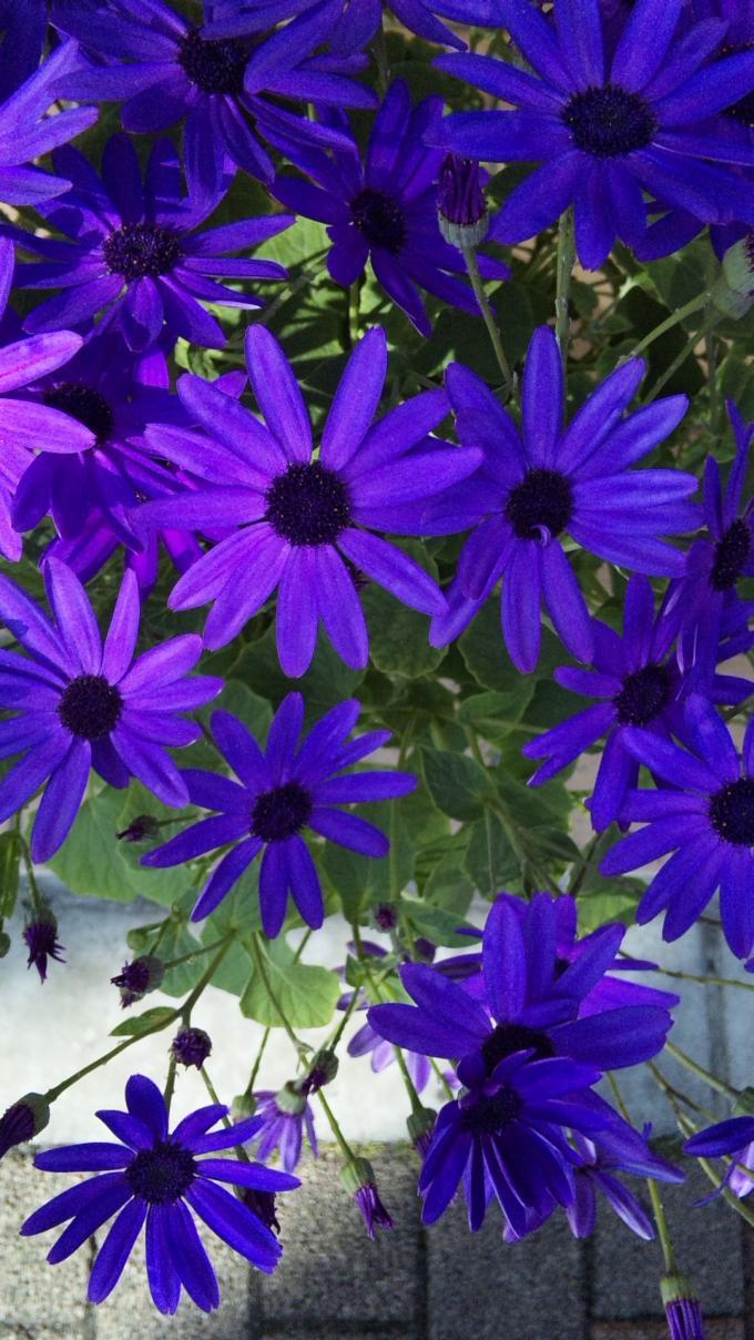 Flowers_20120224