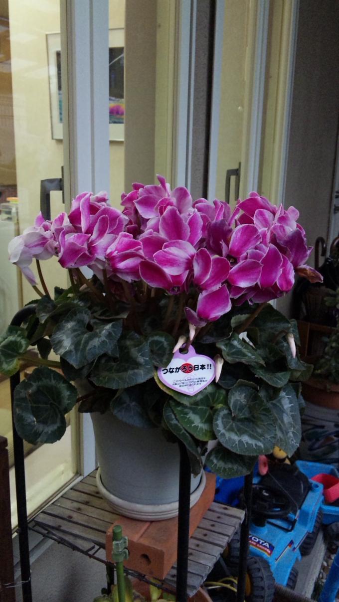 Flowers_20120225