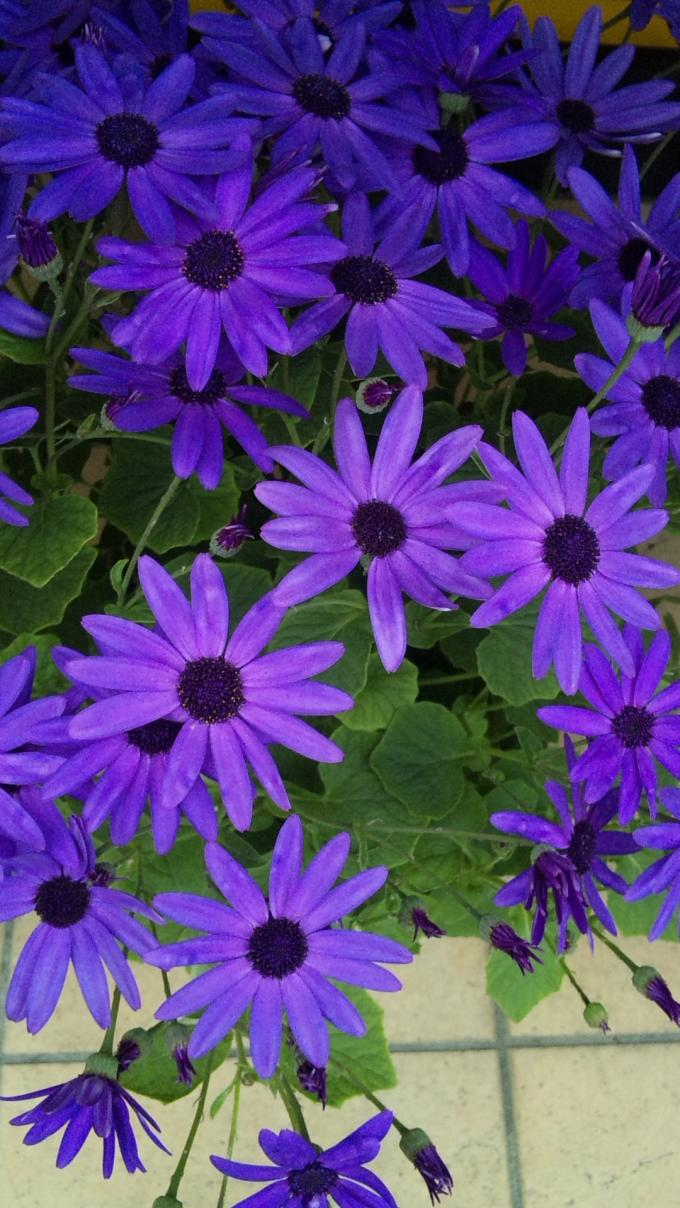 Flowers_20120226