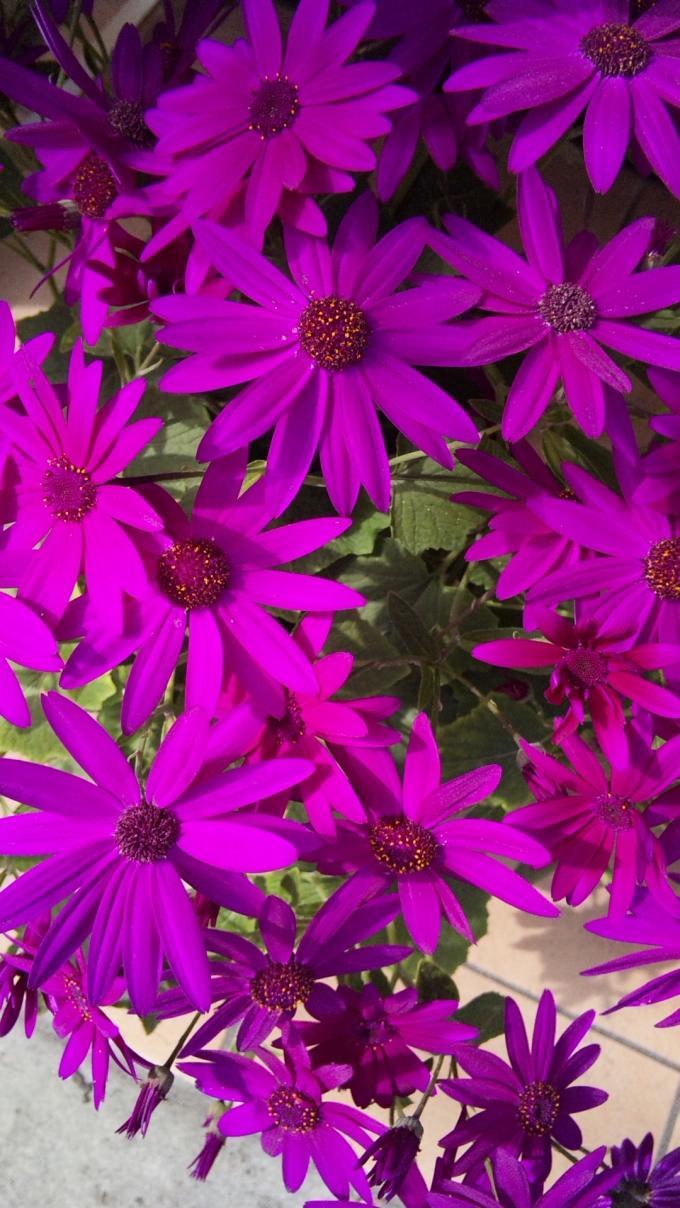Flowers_20120227