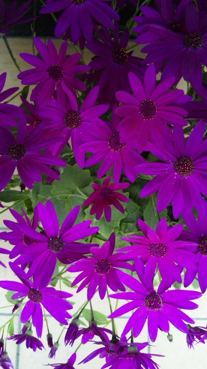Flowers_20120228
