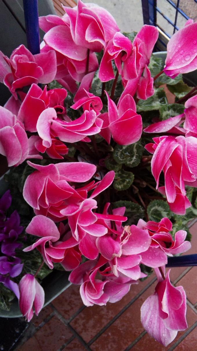 Flowers_20120229