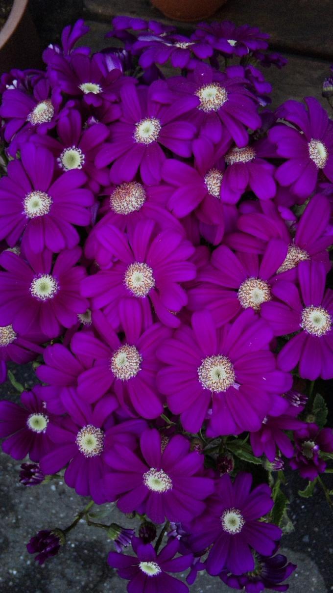 Flowers_20120301