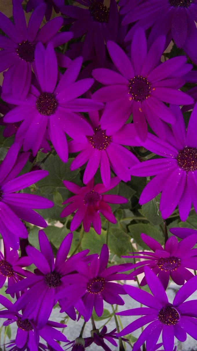 Flowers_20120302