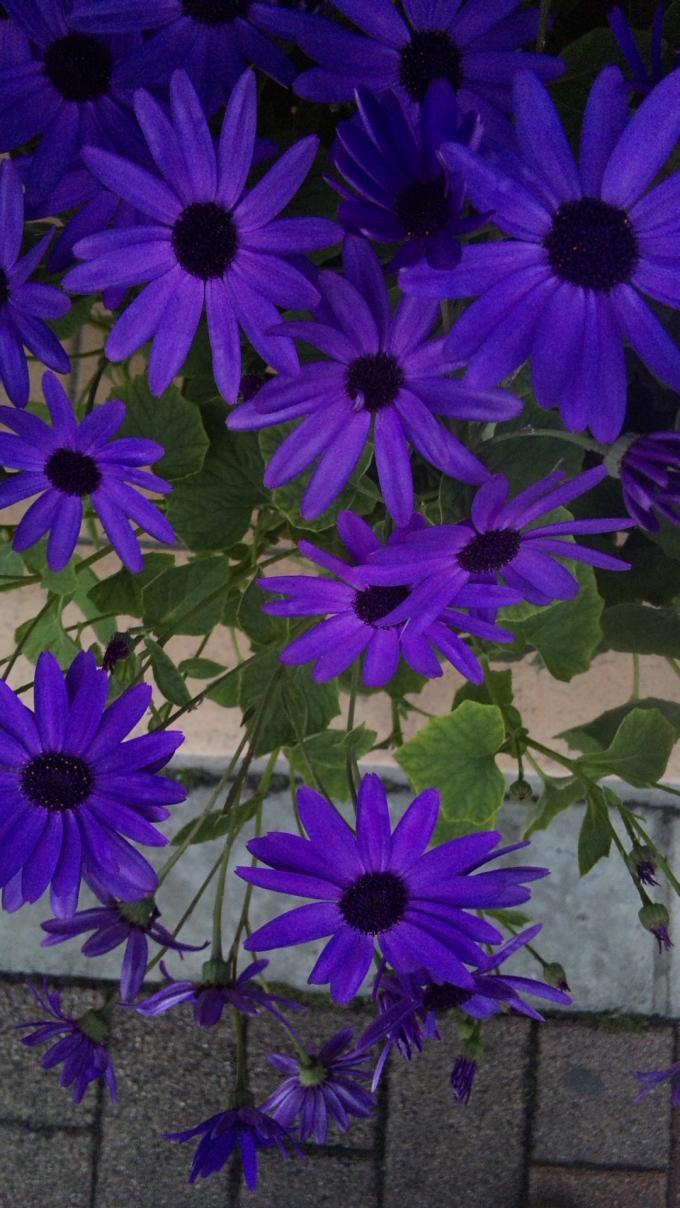 Flowers_20120303