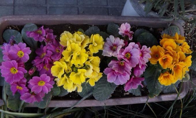 Flowers_20120304