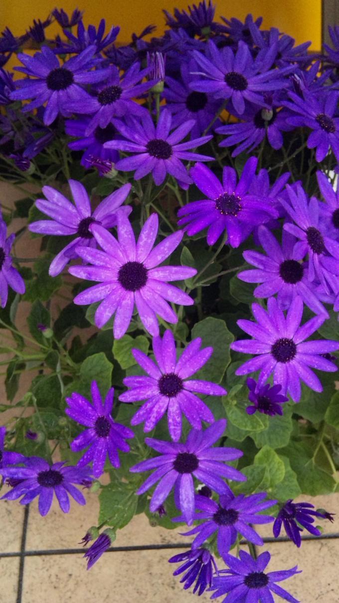 Flowers_20120305