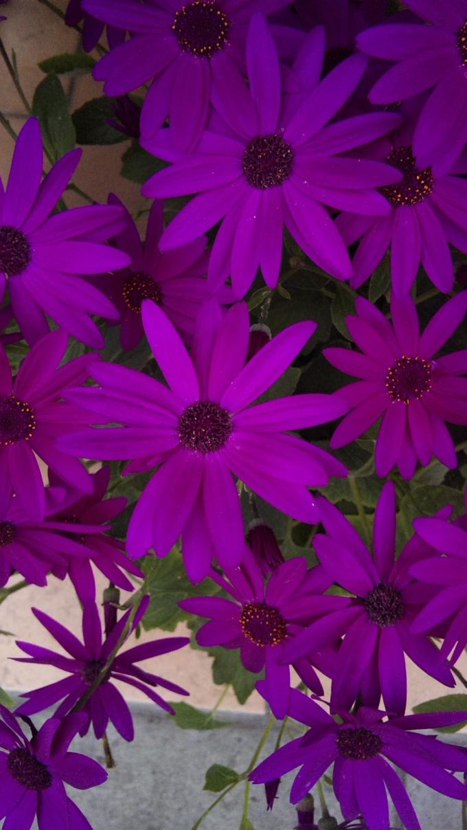 Flowers_20120306