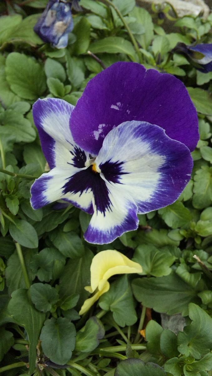 Flower_20120307
