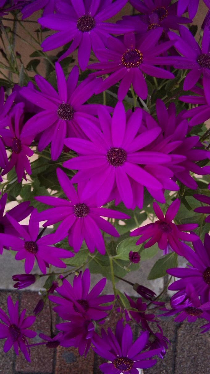 Flowers_20120307