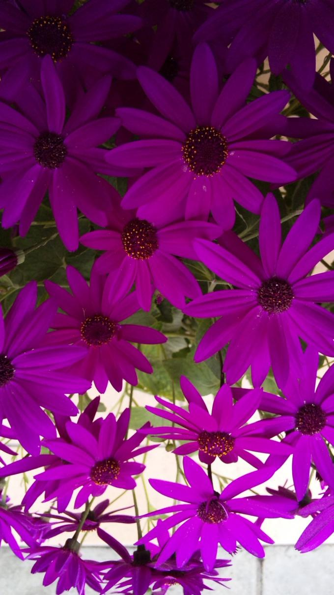 Flowers_20120308