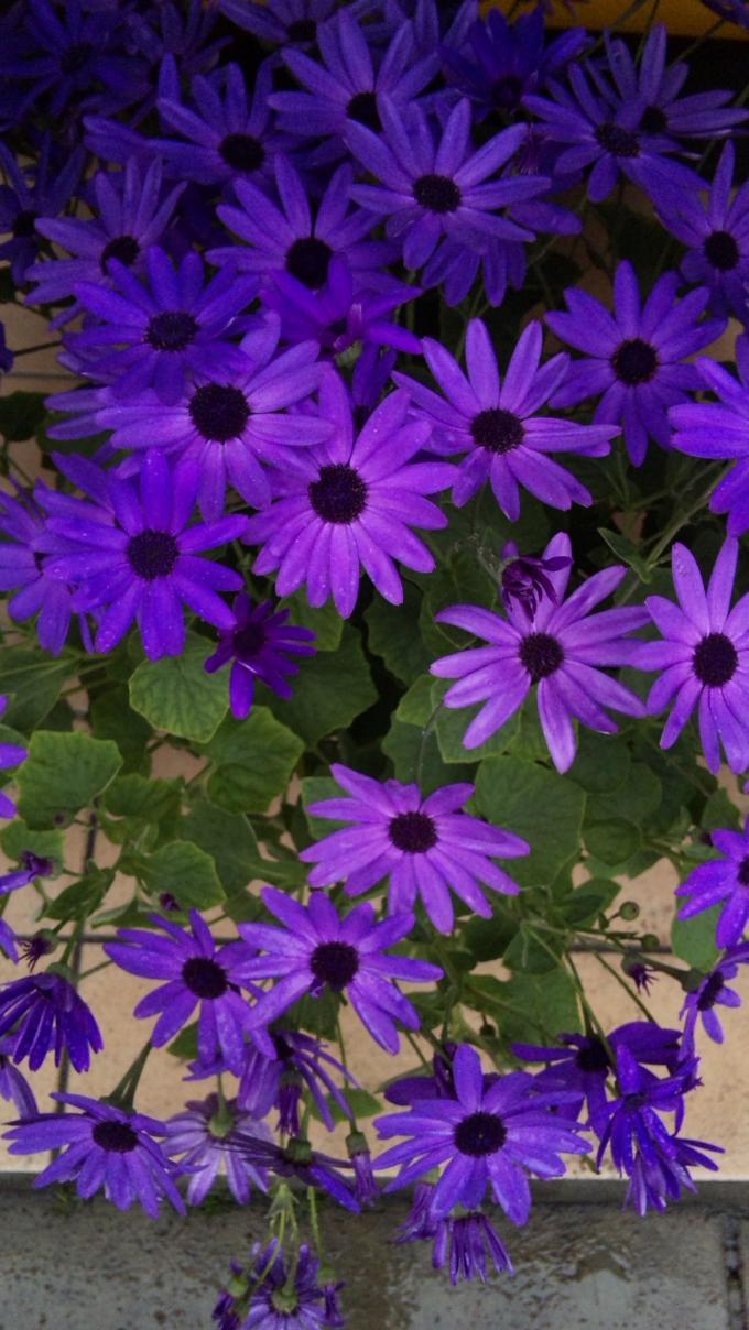 Flowers_20120309