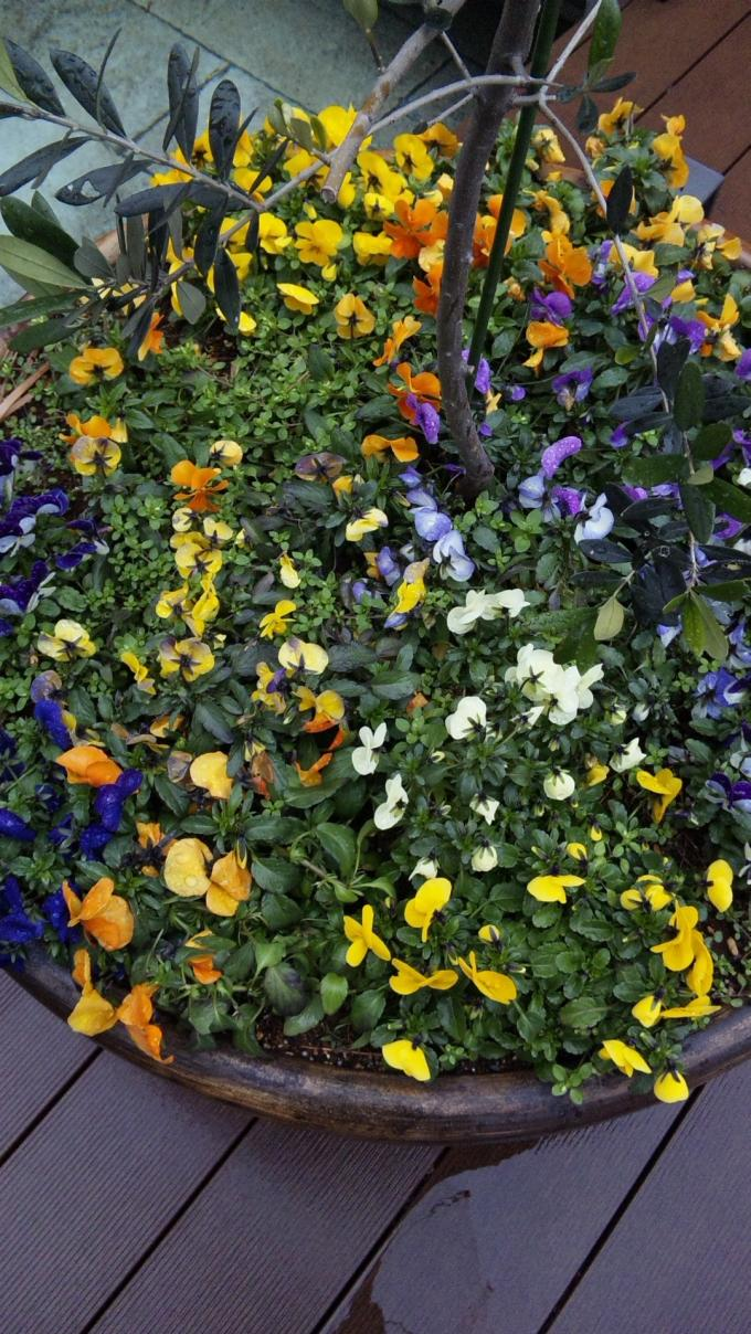 Flowers_20120310