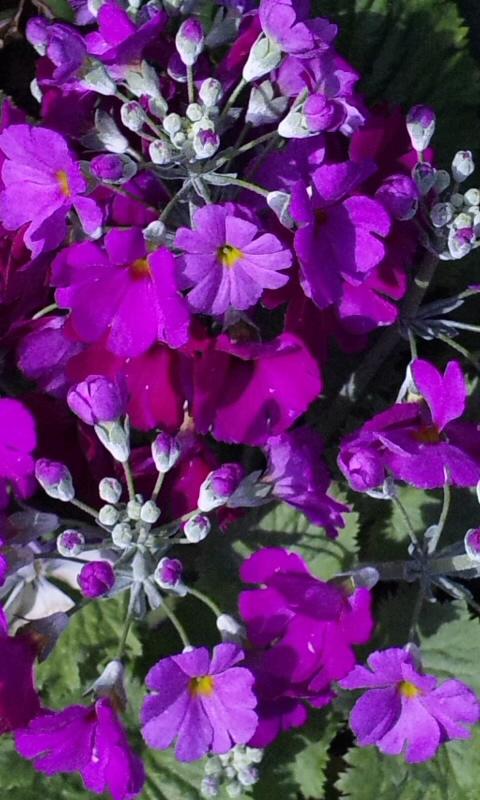 Flowers_20120311