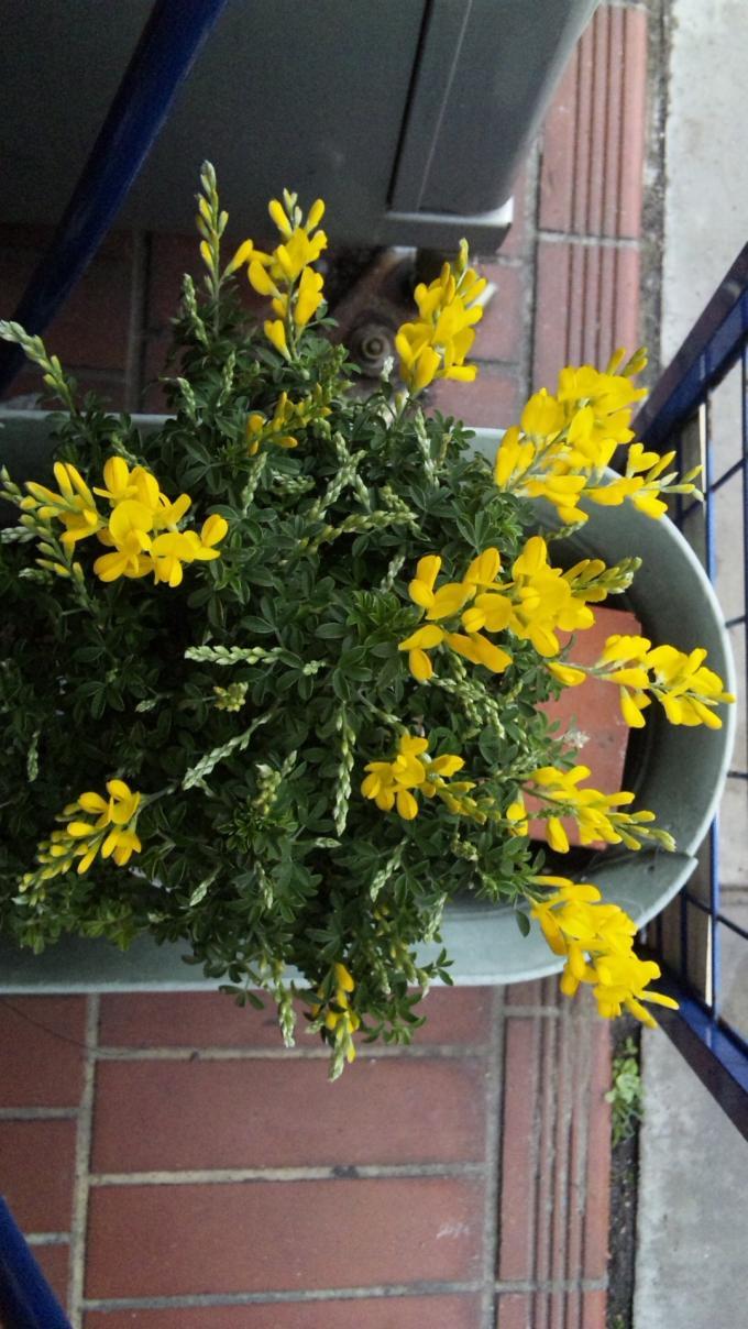 Flowers_20120312