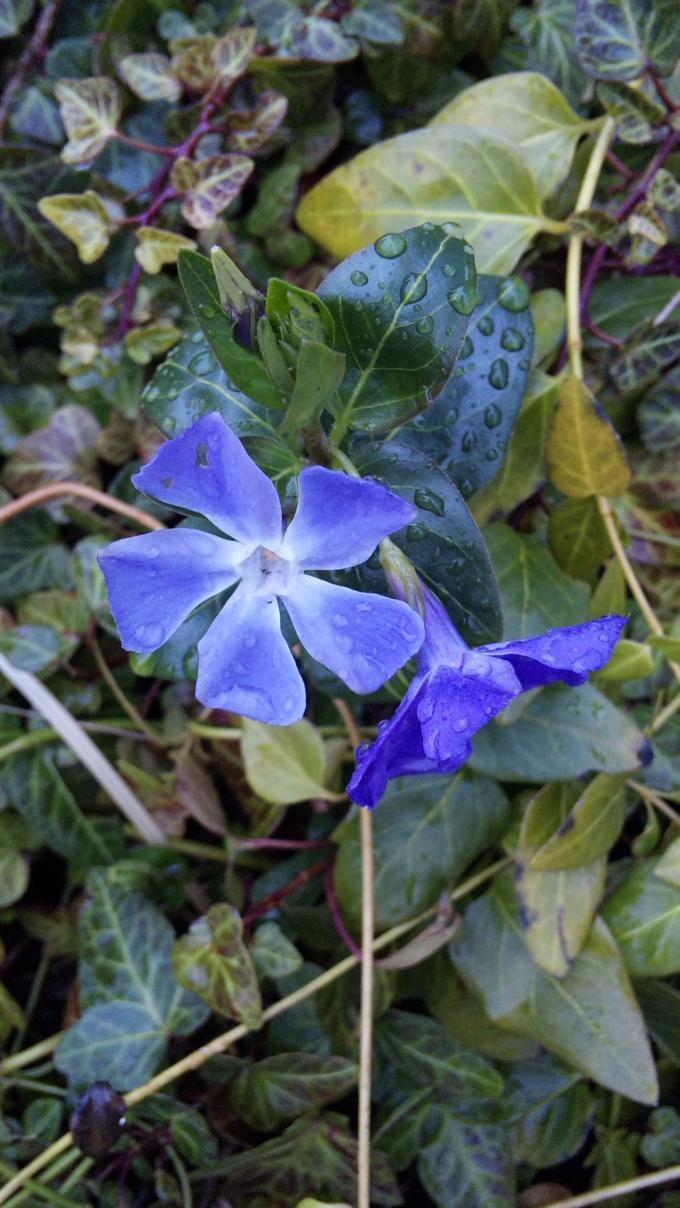 Flower_20120313