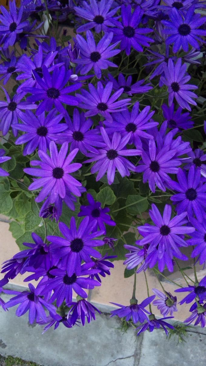 Flowers_20120314