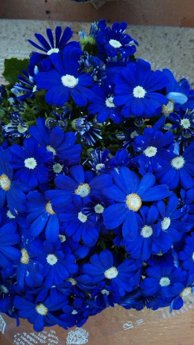 Flowers_20120315
