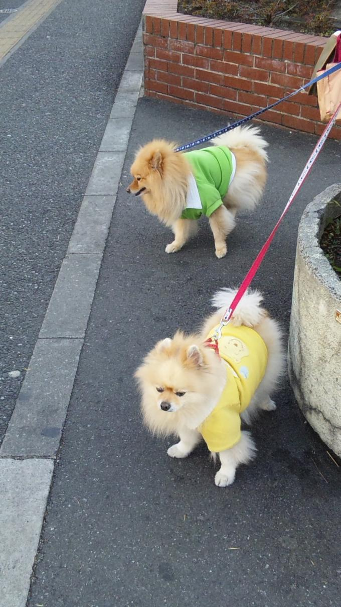 DOG_20120104