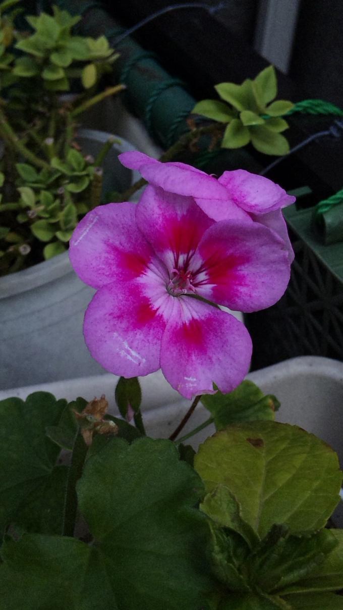 Flower_20111126